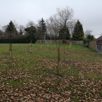 Trees On Grove Field